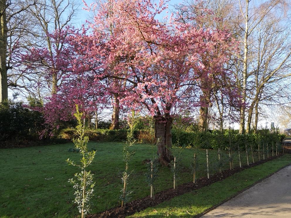 Bursting into Spring!